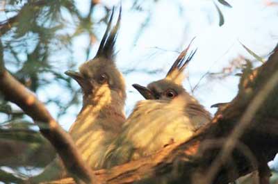 Baby birds at Fleur McDonald's farm