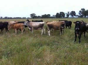 Dairy Farm, Shepparton, Victoria