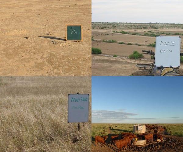 Bokhara Plains pasture rejuvenation