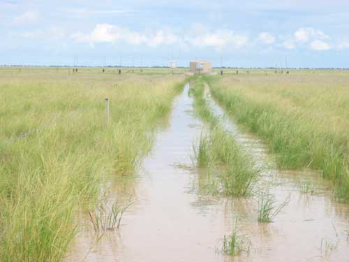 Muddy Water Point on Bokhara Plains