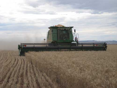 Harvest at Willowie, Mid North South Australia