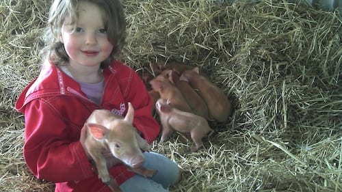 Greenvale piglets in good hands