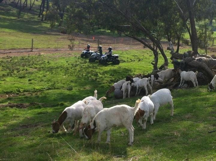 The Atar children mustering goats at Seven Hills