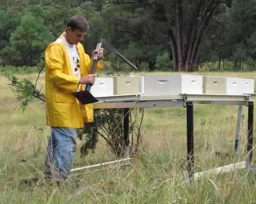 Andrew Wyszynski tending his bee hives