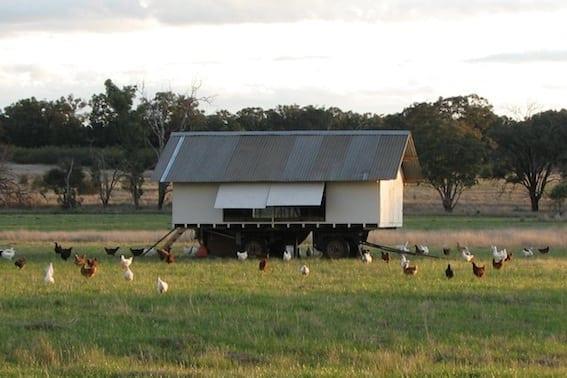 Brigadoon Harvest's first mobile hen house