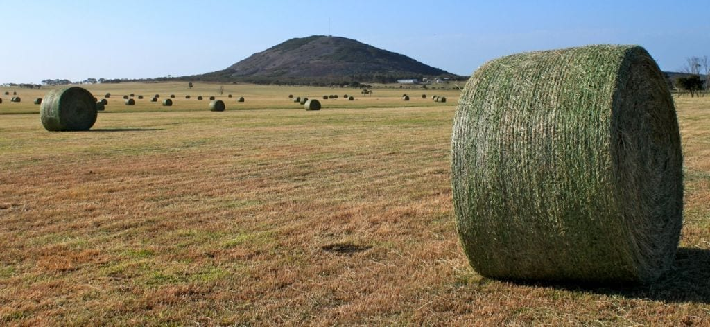 Pasture Hay in Bales