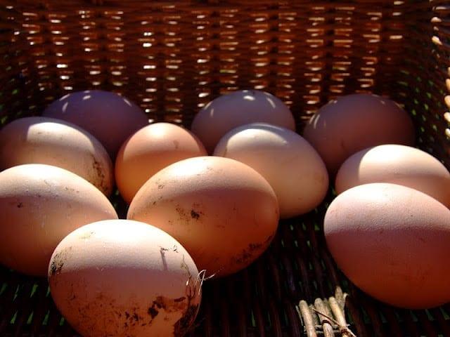 KTs farm life eggs