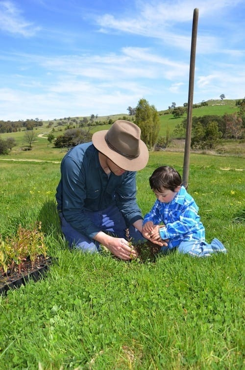 Planting native trees for wind breaks at Sidonia Hills