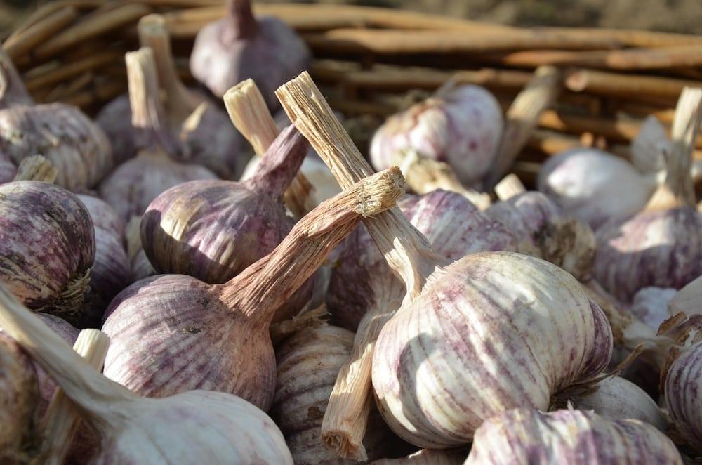 Greendoor garlic