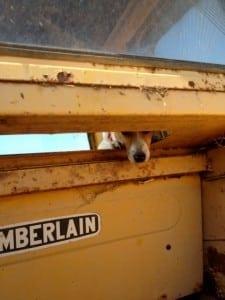 Peek-a-boo, I can see you!