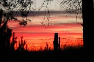 Anzac dawn