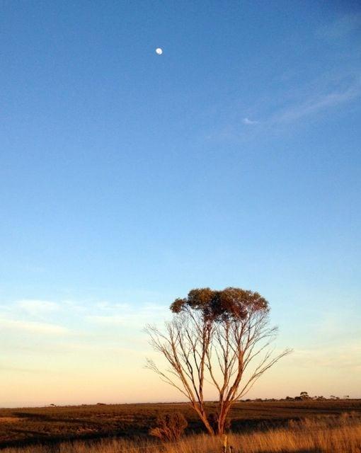 Love a good moon