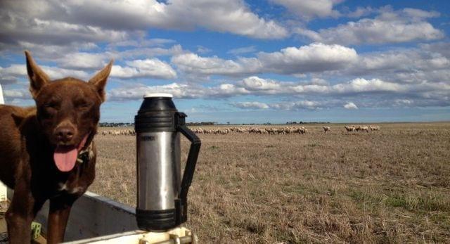 Weasel stopping for morning tea!